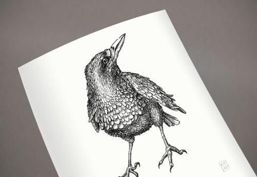 Illustration Tiere Krähe